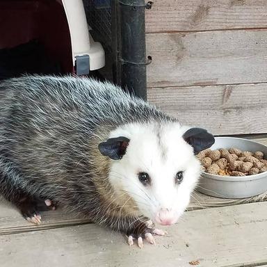 Awesome Possum Pic.jpg