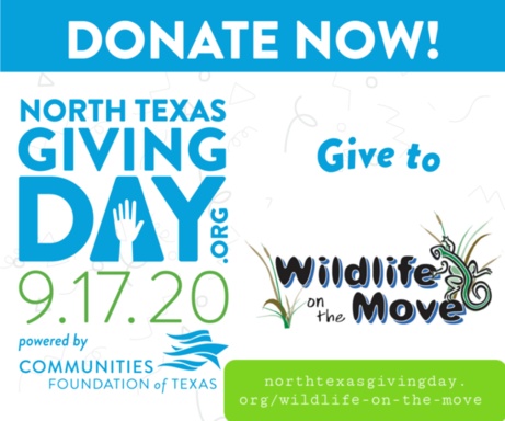 Donate Now to Wildlife On The Move Animal Care!