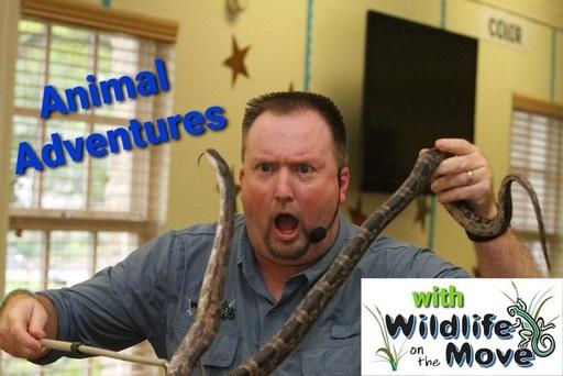 Animal Adventures with WOTM Logo.jpg